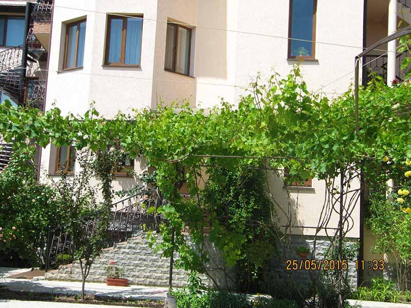 Виноград во дворе отеля