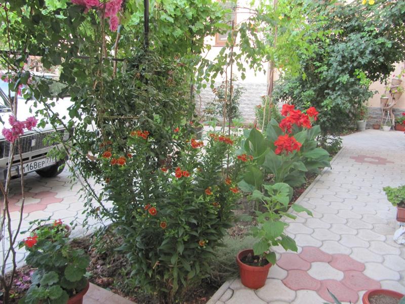 Цветы в саду рядом с цветами в горшках