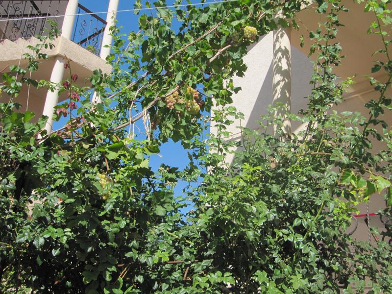 Даже окна в тени благодаря винограду