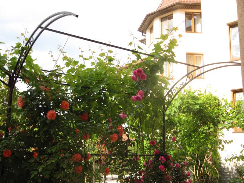 Розы красиво вьются