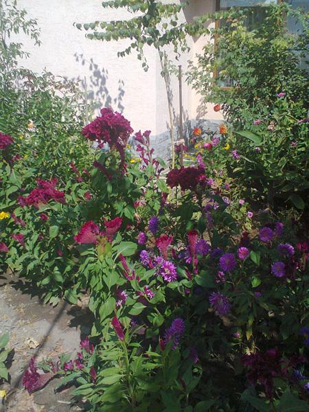 Прекрасные крымские цветы ждут вас!