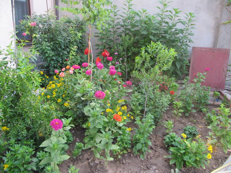 А остальные цветы разноцветным ковром покрывают землю