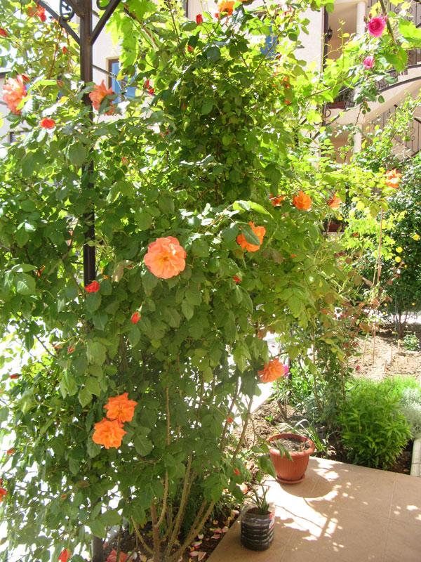 А аромат цветов настраивает на радостный лад