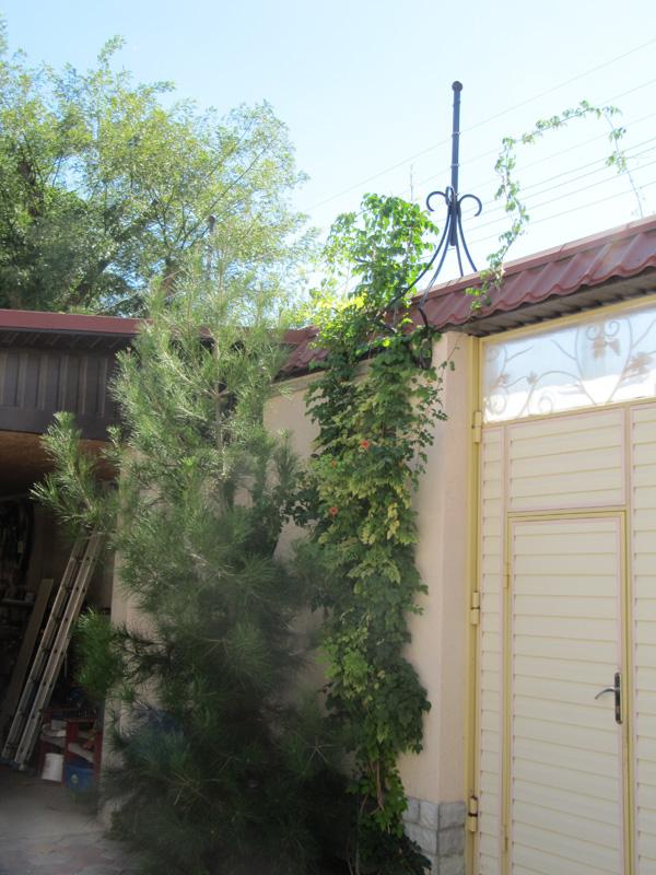 двери и стены обрамлены зеленью