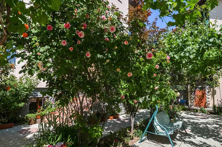 Кусты розы усыпаны цветами