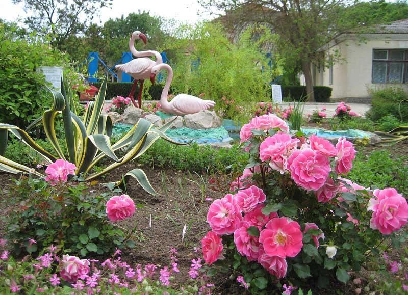 И полюбоваться цветами в городском парке