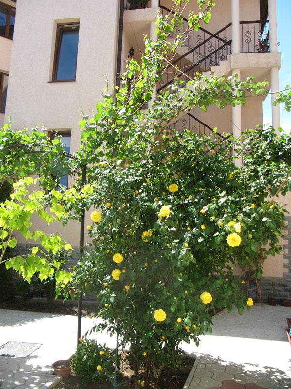 Жёлтые розы очень красивы