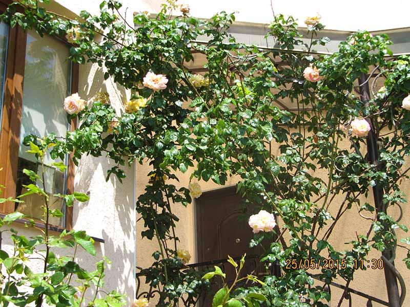 Нежно-розовые