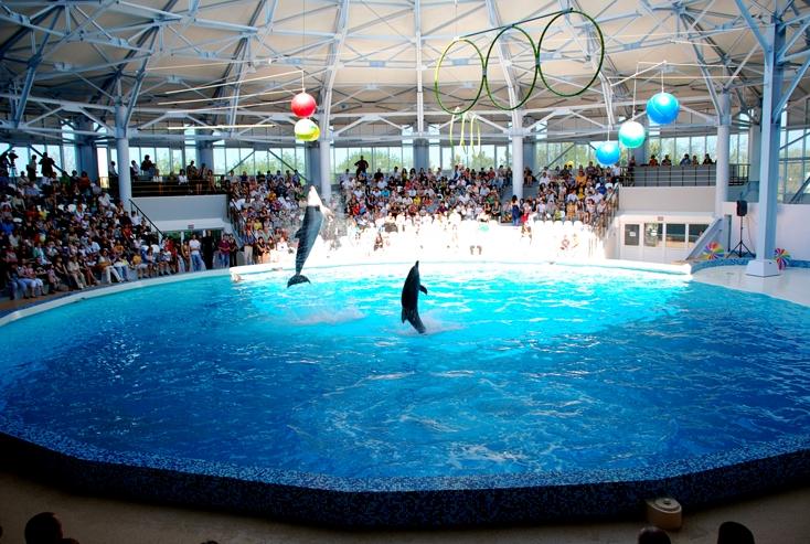 развлечения - евпаторийский дельфинарий