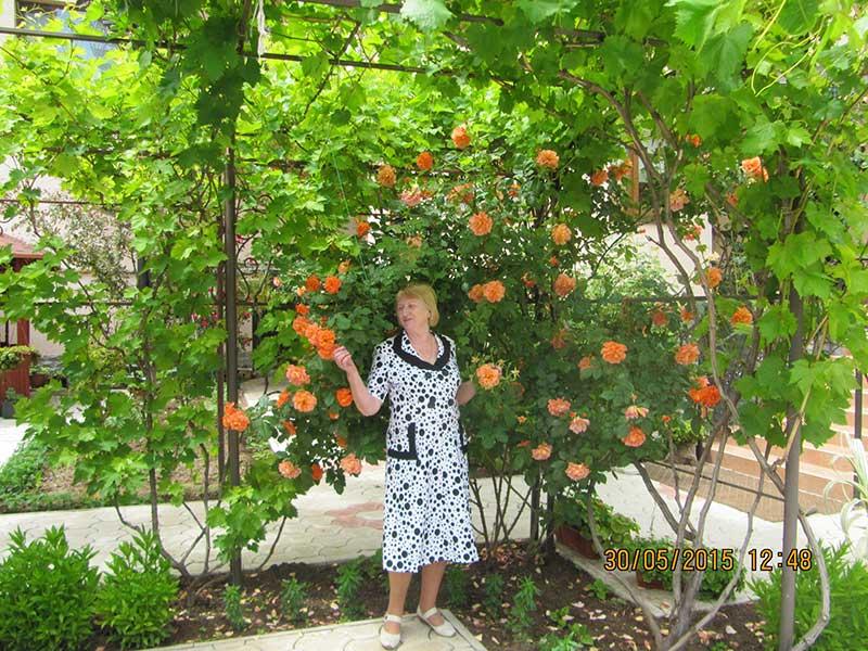 И оранжевые