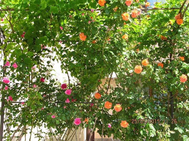 Розовые и оранжевые