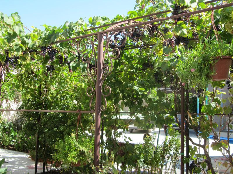 Синие сорта винограда очень вкусны