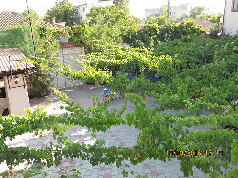 Виноград защитит от палящих лучей