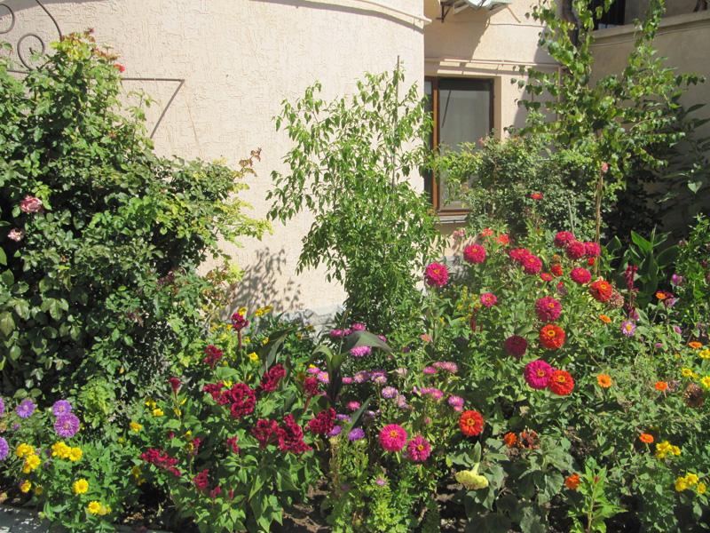 В зарослях цветов можно и заблудиться!