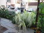 В Крыму множество экзотических растений